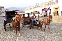 Antigua Guatemala anula licencias para carruajes jalados por caballos