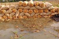 Maga garantiza abastecimiento de productos pese a pérdidas de cultivos por lluvias