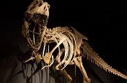 Un dinosaurio 'argentino' resulta ser nativo de Uzbekistán