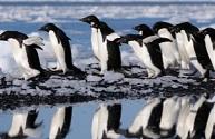 Descubren en la Antártida una colonia de 1,5 millones de pingüinos