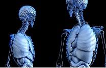 Órganos humanos a domicilio: una empresa rusa desvela todos los secretos de la bioimpresión