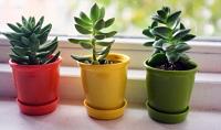 Plantas que atraen energías positivas: ¡descubre su significado!