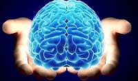 Científicos descubren un segundo cerebro... y se encuentra dentro de tu colon