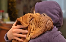 Consejos para cuidar a tu mascota de los golpes de calor