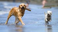 La primera playa para mascotas se abrirá en Turquía