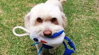 Un juguete por cada botella reciclada: La iniciativa que ofrece muñecos alternativos para mascotas