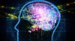 ¿Qué profesiones hacen que el cerebro se encoja?