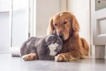 ¿Cuáles son los principales beneficios de las mascotas para nuestra salud?